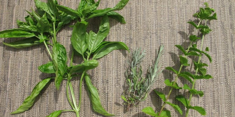 herbs acupuncture