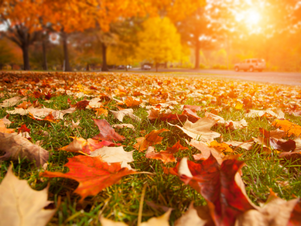 Leaves in a field during Autumn, get acupuncture for fall allergies